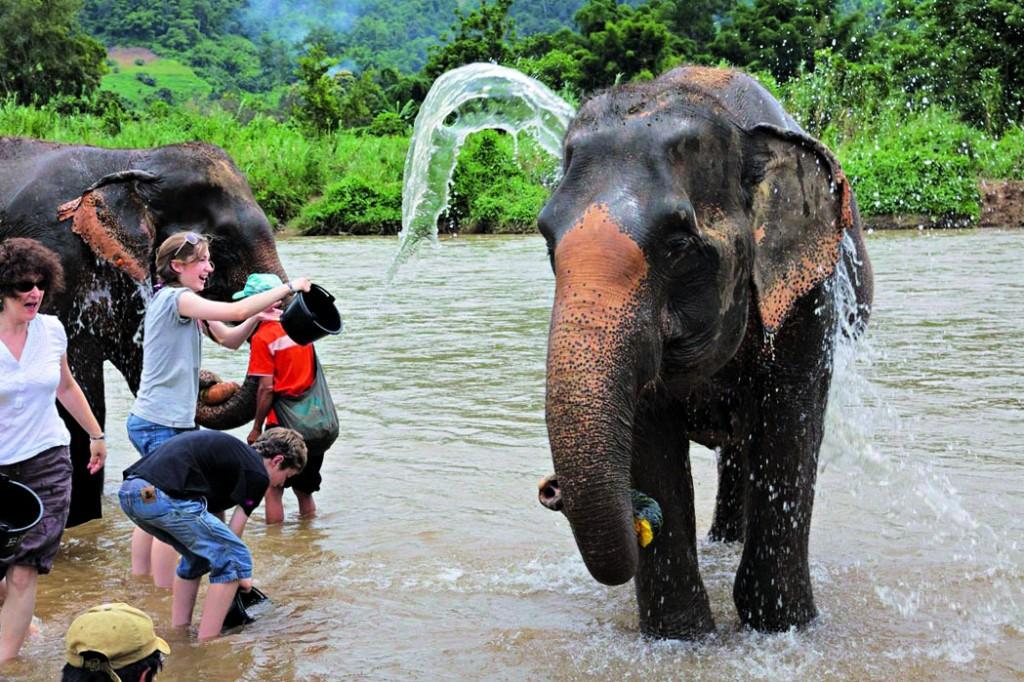 Elefant in apa_ENP_Thailanda