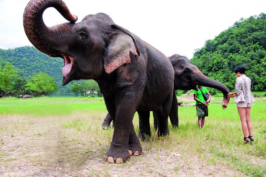 Raiul elefanților