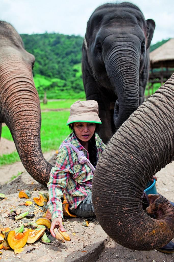 Lek_Elephant Nature Park