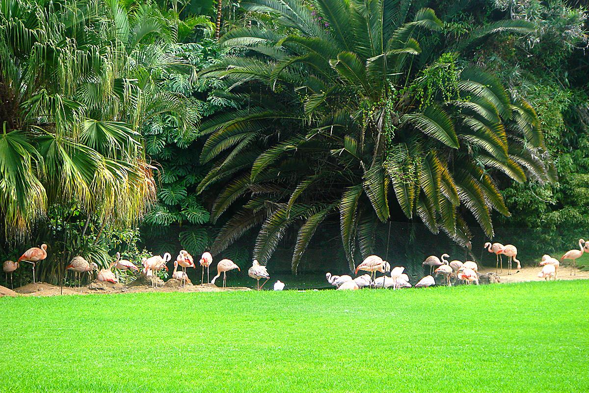 Pasari flamingo in Loro Parque_Tenerife