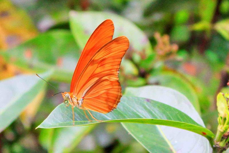 Thailanda_ferma de fluturi