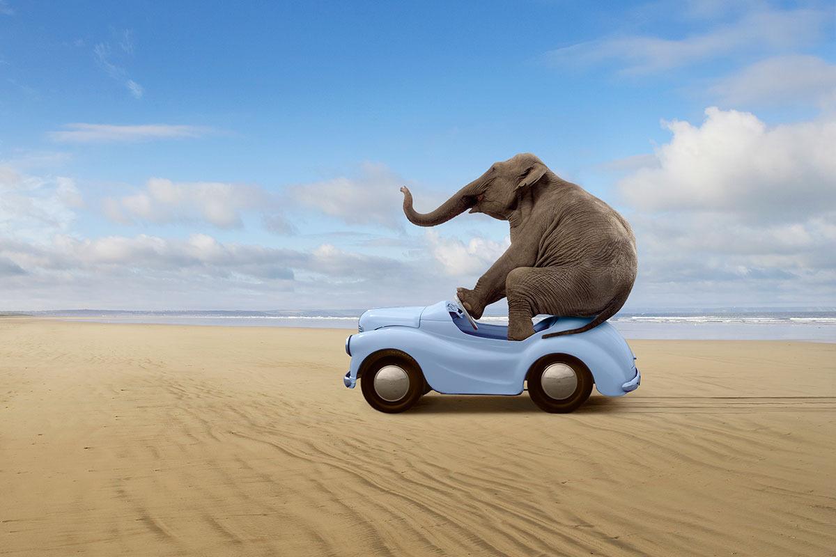 Elephant-in-a-car