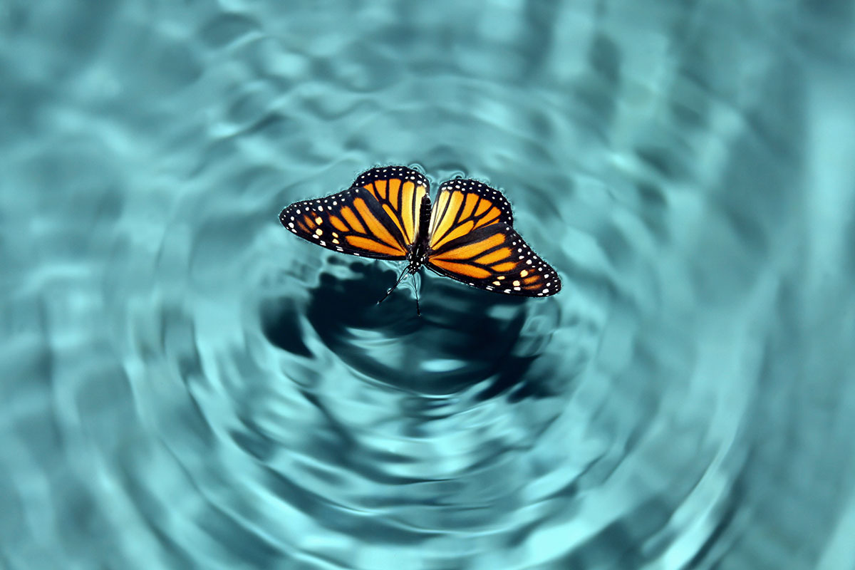 fluture-deasupra-apei